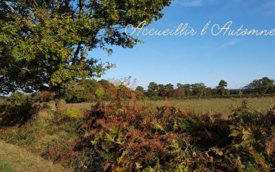 🍂 Accueillir l'automne avec sérénité